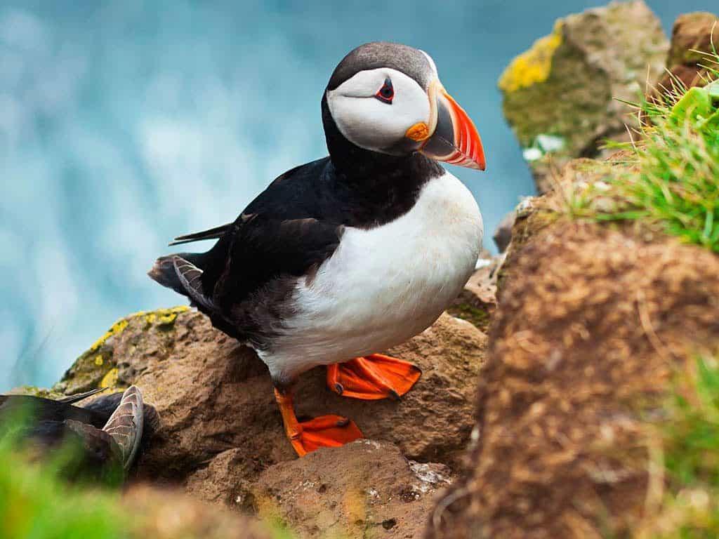 Scenic Island Discovery cruise