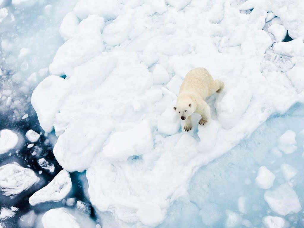 Scenic Ultimate Arctic cruise
