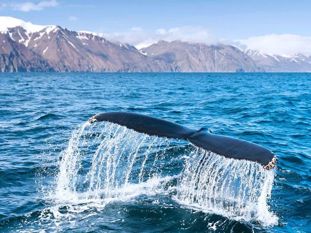 Ultimate Viking & Iceland Discovery cruise