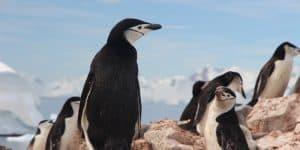 Wildlife Antarctica Cruise