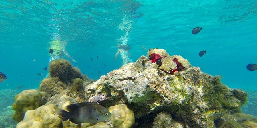 Snorkel Beachcomber Paradis Mauritius
