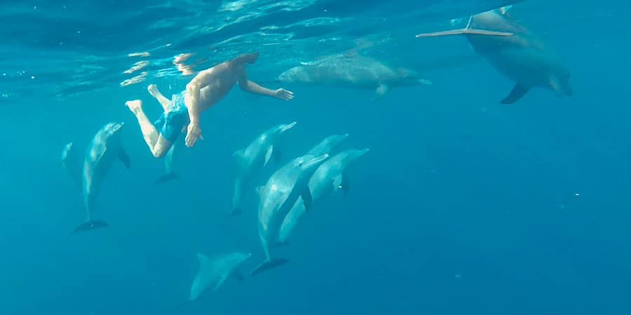Swimming with Bottlenose Dolphins Le Morne Mauritius Beachcomber Paradis