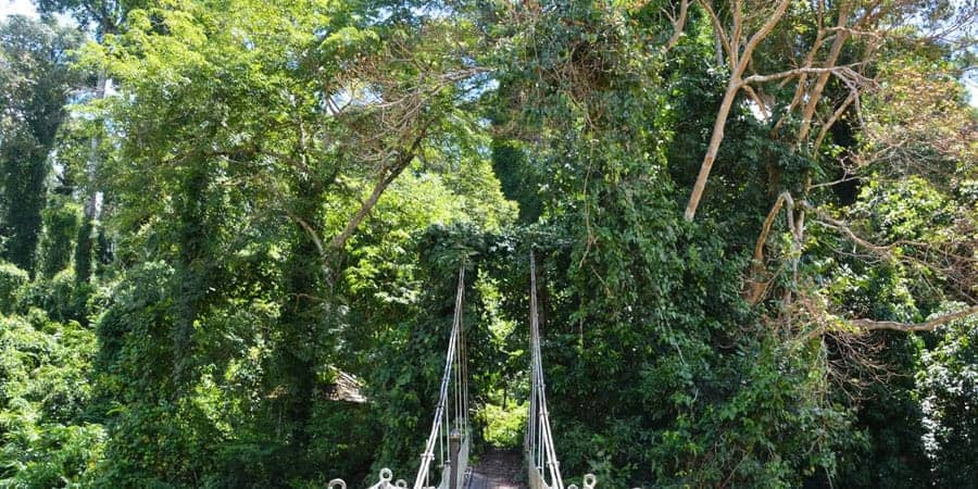 Borneo-Jungle