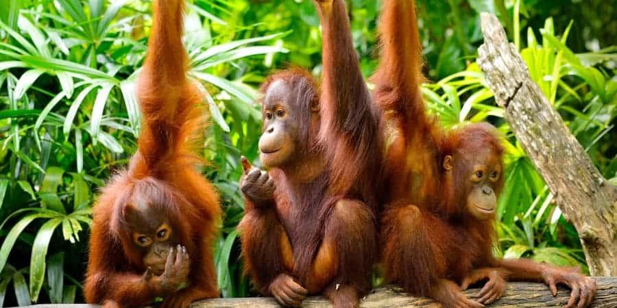 Borneo-Wildlife-Adventure