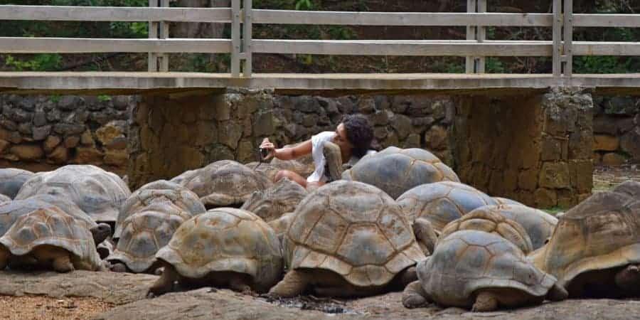 Giant-Tortoise-Mauritius