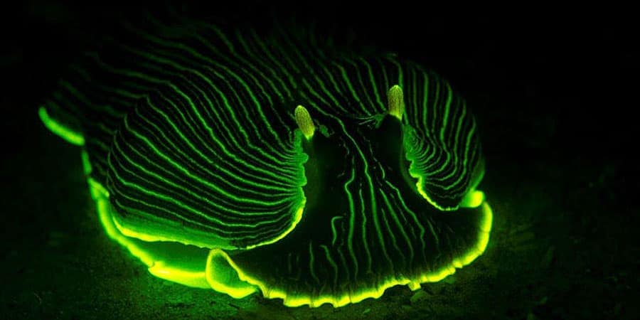 LUX-Glow-in-the-dark-swimming