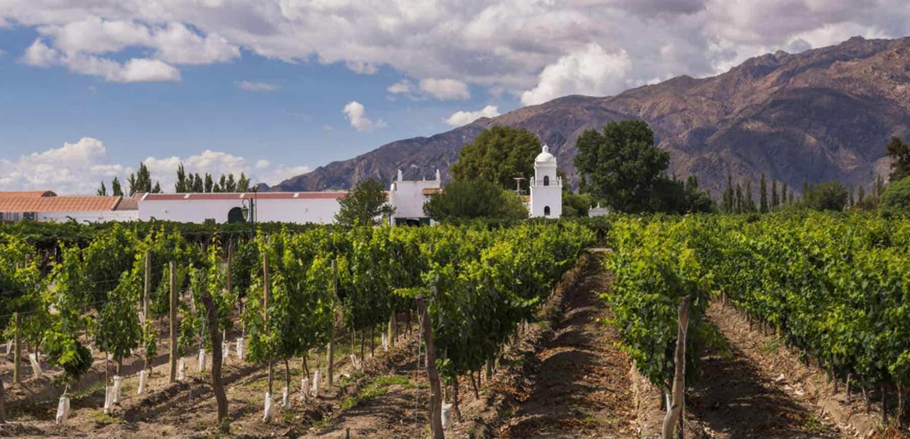 wine Argentina tour