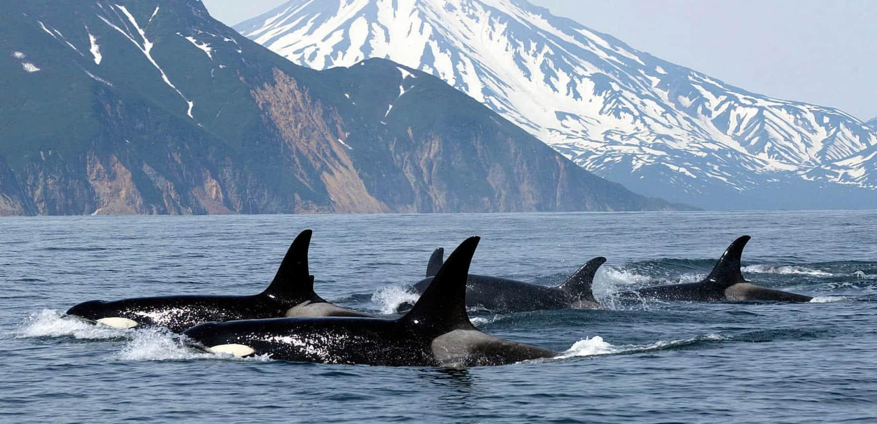 wildlife-canada-touring-holiday