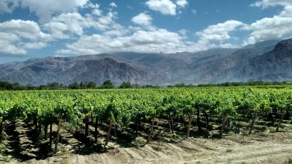 Argentina-Touring-Holidays-wine-tours