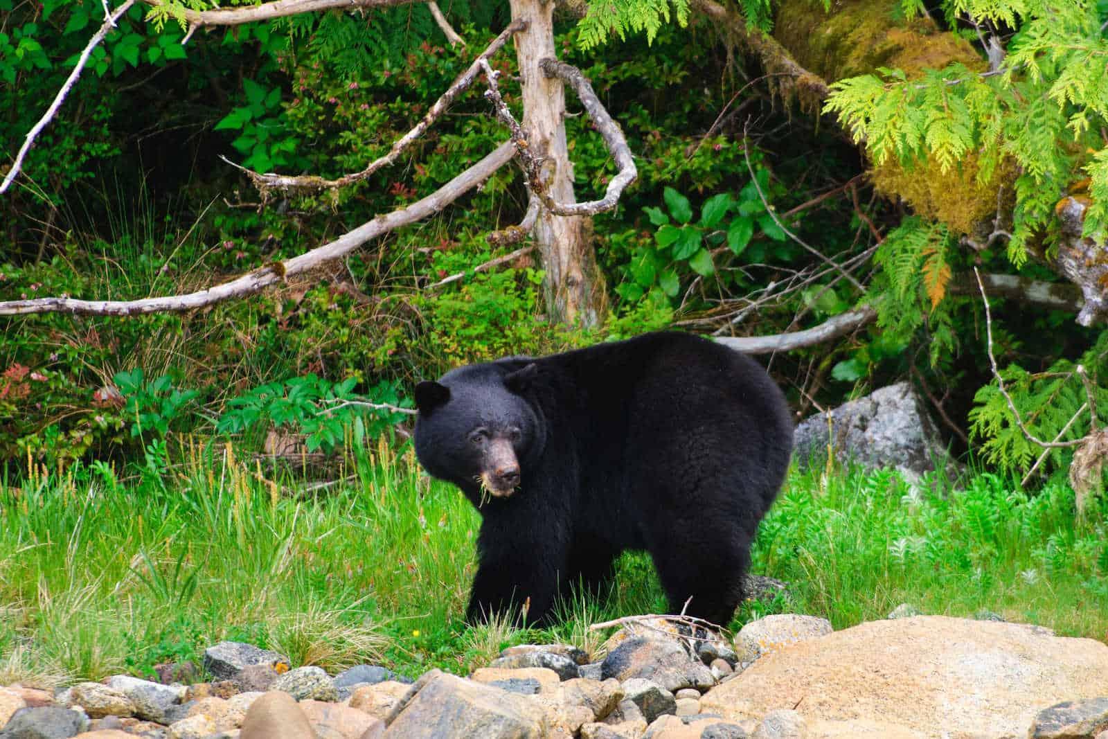 British Columbia Wildlife Tour - Canada