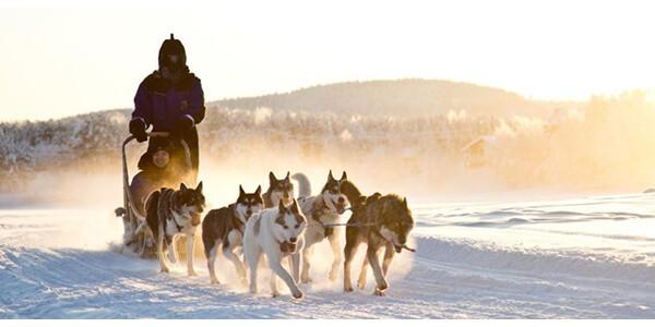 finland_lapland_saariselka_husky-safari