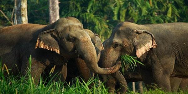 3.-Elephants-in-Thailand-Jun-2018