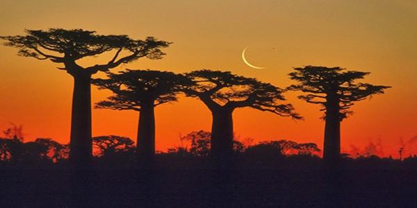 baobab-trees-antsiranana