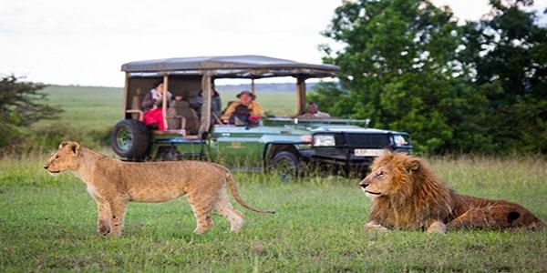 Authentic-safari-camping-in-Amboseli-and-the-Masai-Mara