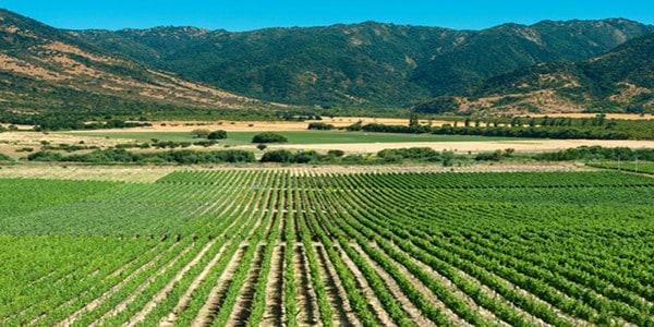 colchagua-valley