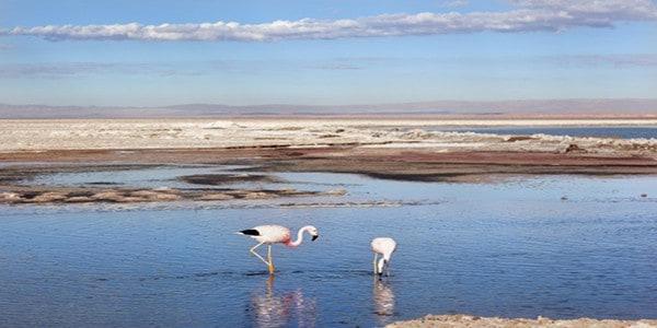 flamingos-salar-de-atacama