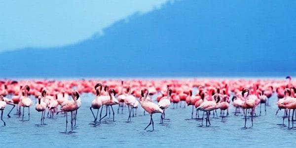 lake-nakuru-flamingos